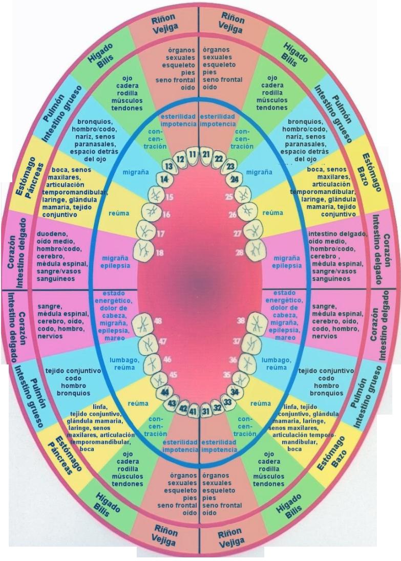 esquema odontología neurofocal clinica balaciart alicante clinica dental alicante